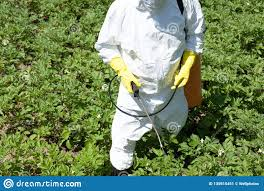 farmer spraying toxic pesticide or insecticide in the vegetable garden