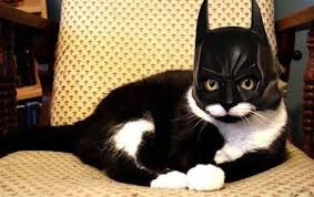 cute kittens in halloween costumes. Plain Halloween Cutecatcostumes27 Inside Cute Kittens In Halloween Costumes E