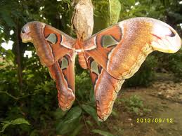 Wing Pattern Awesome Design Ideas