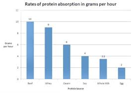 Protein Absorption Chart Protein Absorption Rate Chart