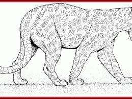 Phenomenal Leopard Coloring Pages Baby Page Ktwo84hhk Gif Color Cub