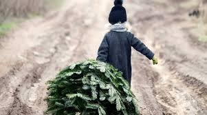 Lonely <b>Christmas Tree</b> | Nordic Choice Hotels