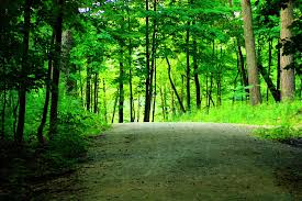 outdoor woods backgrounds. Plain Backgrounds Inside Outdoor Woods Backgrounds