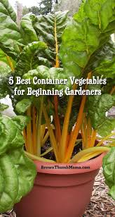 Kitchen Gardening Tips 699 Best Images About Kitchen Garden On Pinterest Gardens How