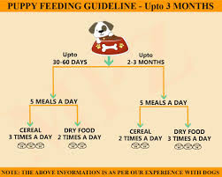 Puppy Eating Chart Best Food For Labrador Marshallspetzone I Blog