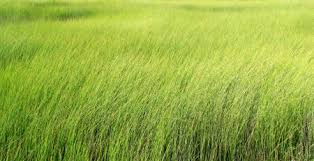 Free photo Tall grass Texture nature outdoor natural
