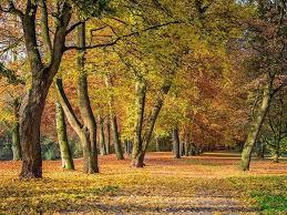 「秋天」的圖片搜尋結果