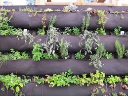 general herb carecreating an herb wall garden