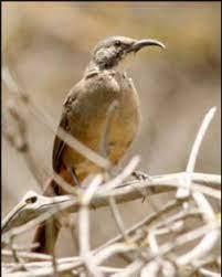 San Fernando Valley Audubon Society Program Notes: Mike Prather to speak at  Thursday, October 28