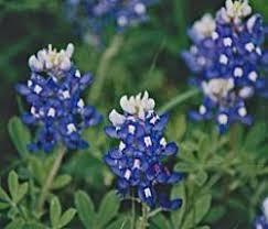 Deloris Lawrence Obituary - Kingsland, Texas | Legacy.com