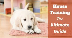 Puppy House Training Chart House Training A Puppy The Complete Guide Totally Goldens