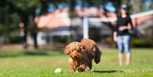 Puppy Culture Exercise Guidelines For Puppies Doggear