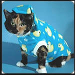Images & Illustrations of cats pajamas