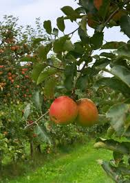 Michigan Entrepreneurs Want The Saskatoon To Be The Next Big Fruit What Fruit Trees Grow In Michigan