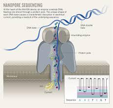 Nanopore Sequencing Genomics Institute