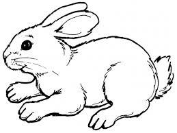 Ausmalbilder Kaninchen Zum Ausdruckenll L