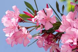 best shrubs for mediterranean gardens