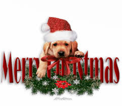 cute merry christmas wallpaper dogs.  Dogs Teddybear64 Images Merry Christmas Dear Frances U003c3 Wallpaper And Background  Photos Throughout Cute Wallpaper Dogs A