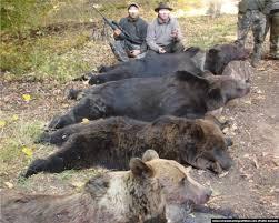 Cât costă viața unui urs. România își ucide animalele sălbatice prin derogări