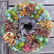 Small Picture Falling for Succulents Garden Design