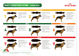 Image Result For Dog Body Condition Chart Large Dogs Dogs