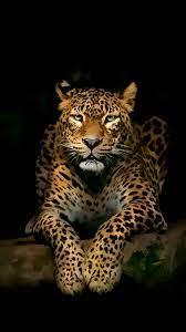 Serious Leopard 3D Spots Illustration ...