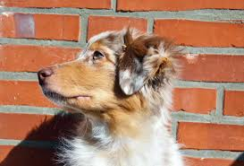 Aggressive Dog Training in Utah County ...
