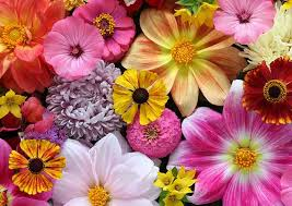 National Flowers - List Of National Flowers by Country
