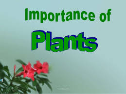 Importance of plants ...
