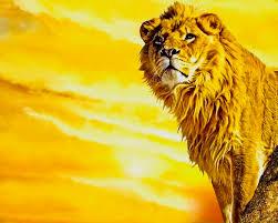 lions wallpaper lion art
