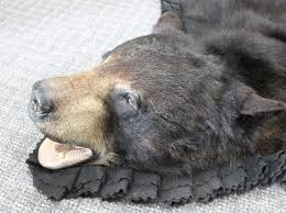 measuring at 77 this gorgeous new black bear rug has beautiful thick fur double black felt border