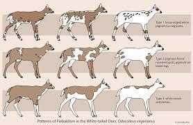 Itty Bitty Bio Bites Piebald Deer Chart