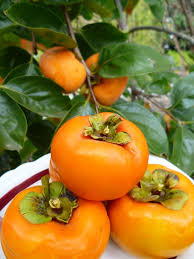 21 Best ABCu0027s Of Sapindaceae Images On Pinterest  Exotic Fruit Full Size Fruit Trees For Sale