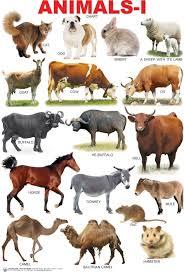 Animals 1 Chart