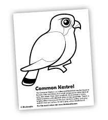 Small Picture Common Kestrel Coloring Page in Birds of Prey Coloring Pages