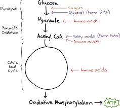fermentation and anaerobic respiration cellular respiration article khan academy