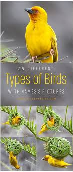 Birds Chart With Names In English 25 Different Types Of Birds With Names And Pictures Styles