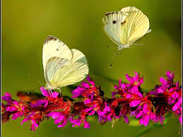 wallpaper desktop widescreen flowers. Beautiful Flowers Flowers And Butterflies Purple Free Wallpaper Desktop On Widescreen