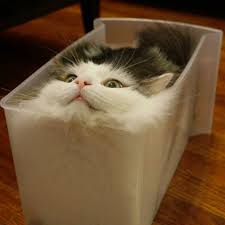 Cat In Bread Box