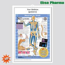 3d Medical Human Anatomy Wall Charts Poster Your Skeleton Pediatric Buy 3d Chart Human Anatomy Wall Poster Pediatric Skeleton Product On