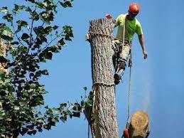 Tree Service, Tree Removal, Tree Company, Mentor OH 44060