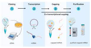 Vaccines | Free Full-Text | Enlisting the mRNA Vaccine Platform to Combat  Parasitic Infections