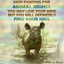 Animal Rights Quotes Simple Animal Rights Quotes Simple œ� Andrea œ� On Animal Vegans And Animal