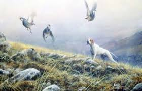 Η ορεινή πέρδικα και το κυνήγι της...