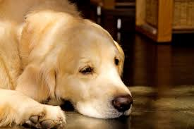 犬も食わないの正しい意味!意外に知らない語源とは?   オトナのコクゴ