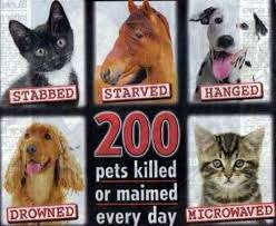animal abuse stop animal abuse ¤¨¨¤ ۜېbunniesluv ۜې  animal abuse stop animal abuse ¤¨¨¤ ۜېbunniesluv912 ۜې¤¨¨¤ stop animal abuse animal abuse statistics animal and animal cruelty