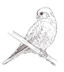 Patterns Kestrel Coloring Page