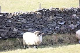 mending wall by robert frost leading questions a level a well mended wall keeps in a friendly sheep