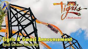 tigris gwazi announcements at busch gardens ta bay