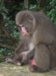 Utube monkey masturbation semen